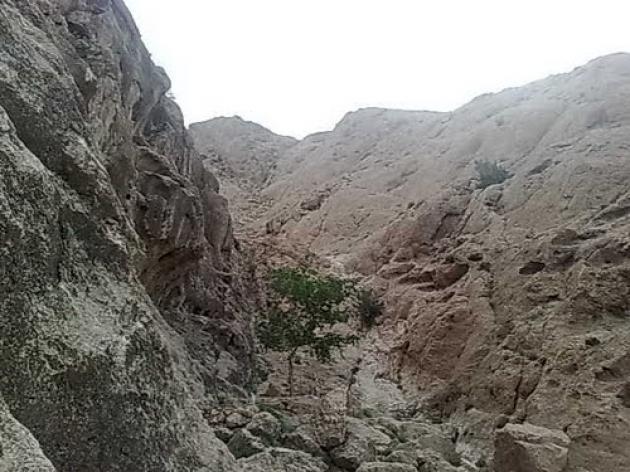 دره ختمی